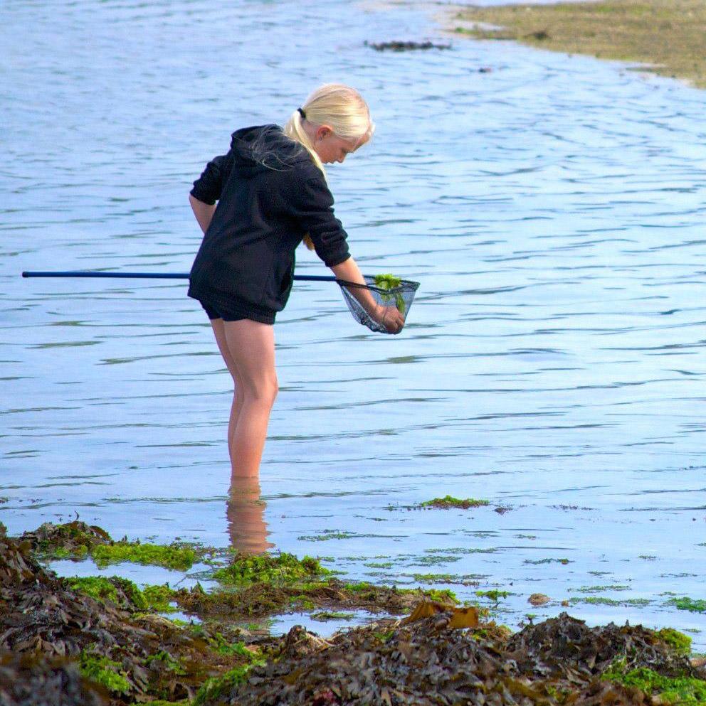 Shrimping on Bryher